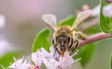 Bienen und Insektenfreundlicher Garten
