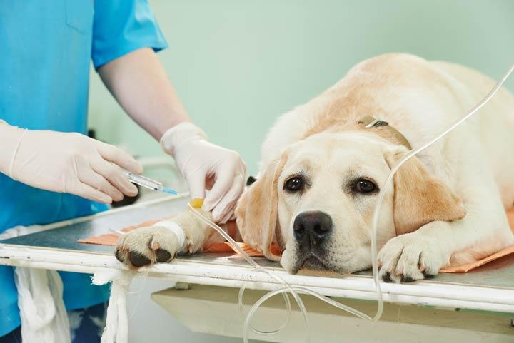 Chronische Krankheiten - Krankenversicherungen für Haustiere
