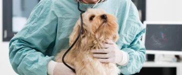 Haustier Krankenversicherung
