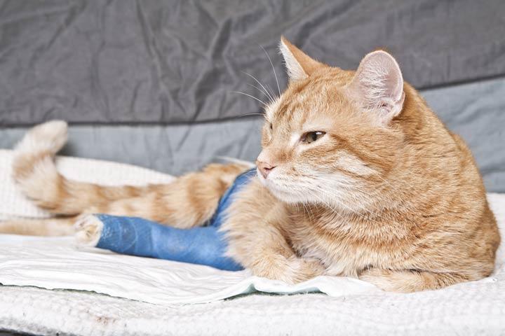 Krankenversicherungen für Haustiere