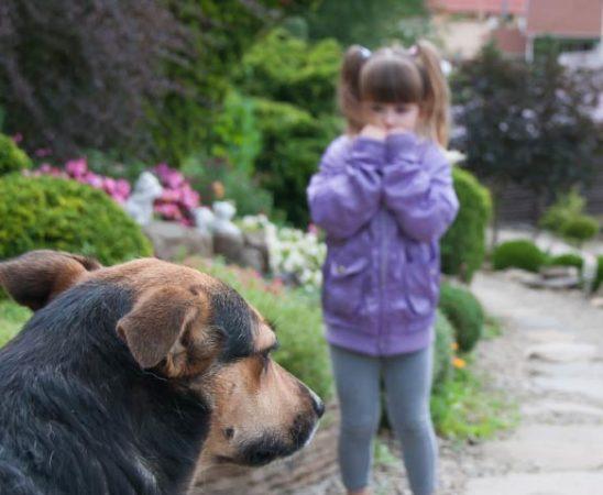 Hundephobie