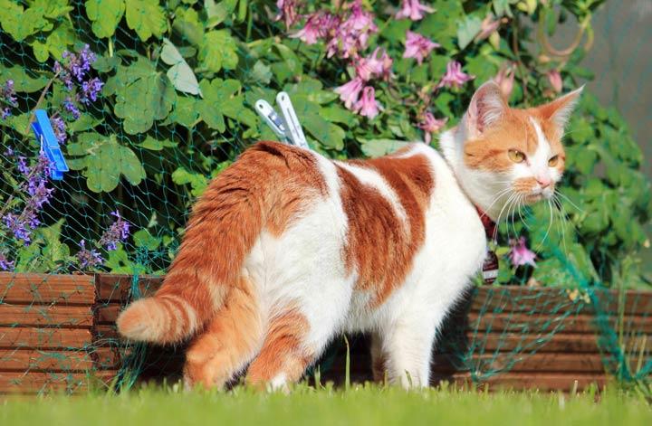 Katzen lieben es die Natur zu erkunden