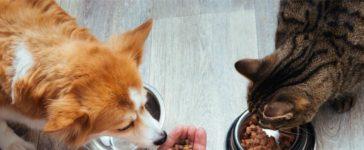 Das beste Hunde- und Katzenfutter für Ihr Tier