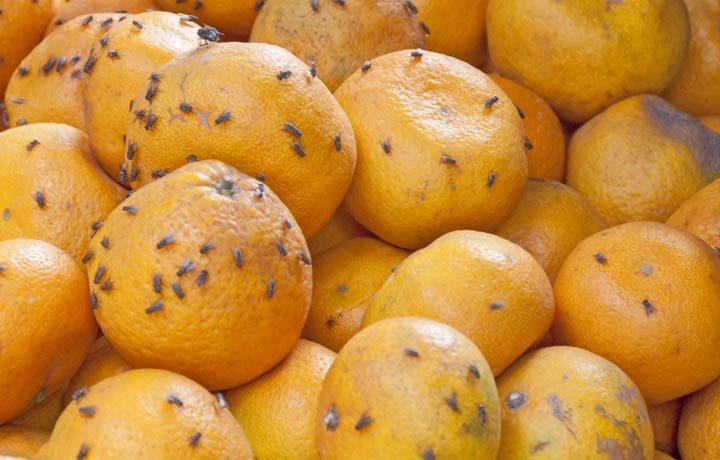 Fruchtfliegen und Mehlmotten loswerden