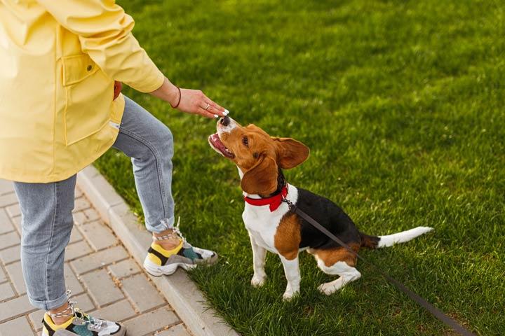 Hund und Herrchen profitieren