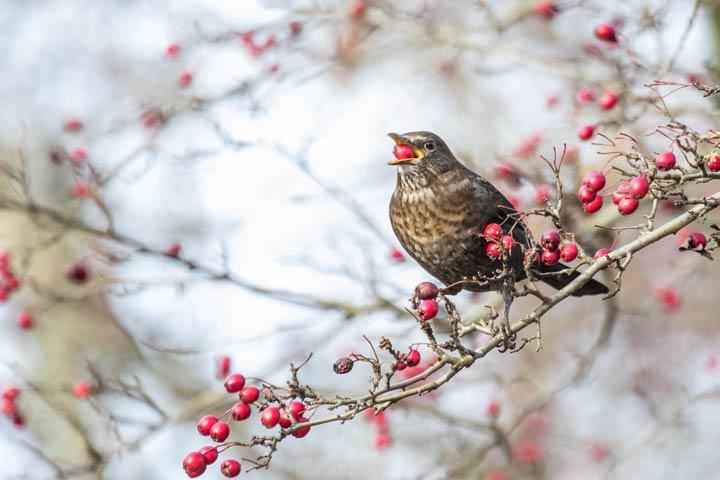 Pflanzen sind bei Vögeln beliebt
