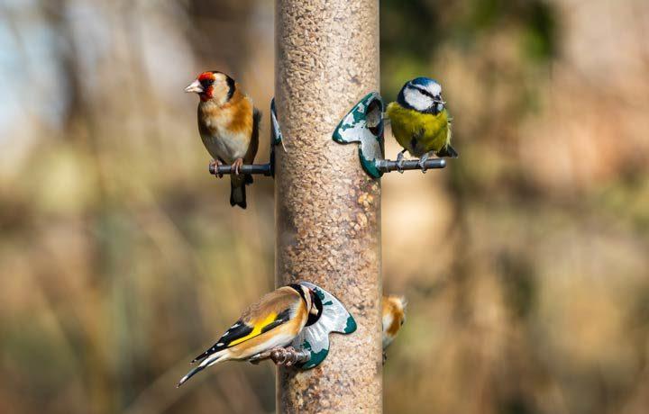 Vögel in den Garten locken