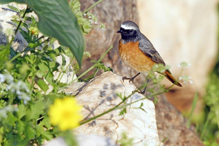 Vogel im naturbelassenen Garten