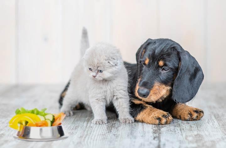 Was Hunde und Katzen fressen