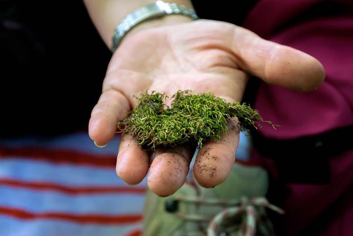 Geschwächtes Gras ist anfällig für Moos