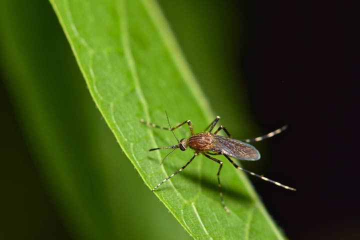 Mücken sind wichtig
