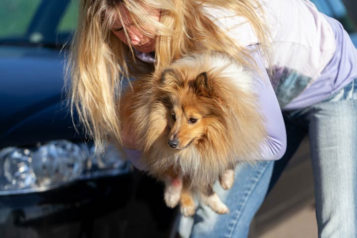 Unfallflucht bei Haustierunfall