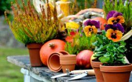 Diese Pflanzen sollten Gartenbesitzer im Herbst setzen